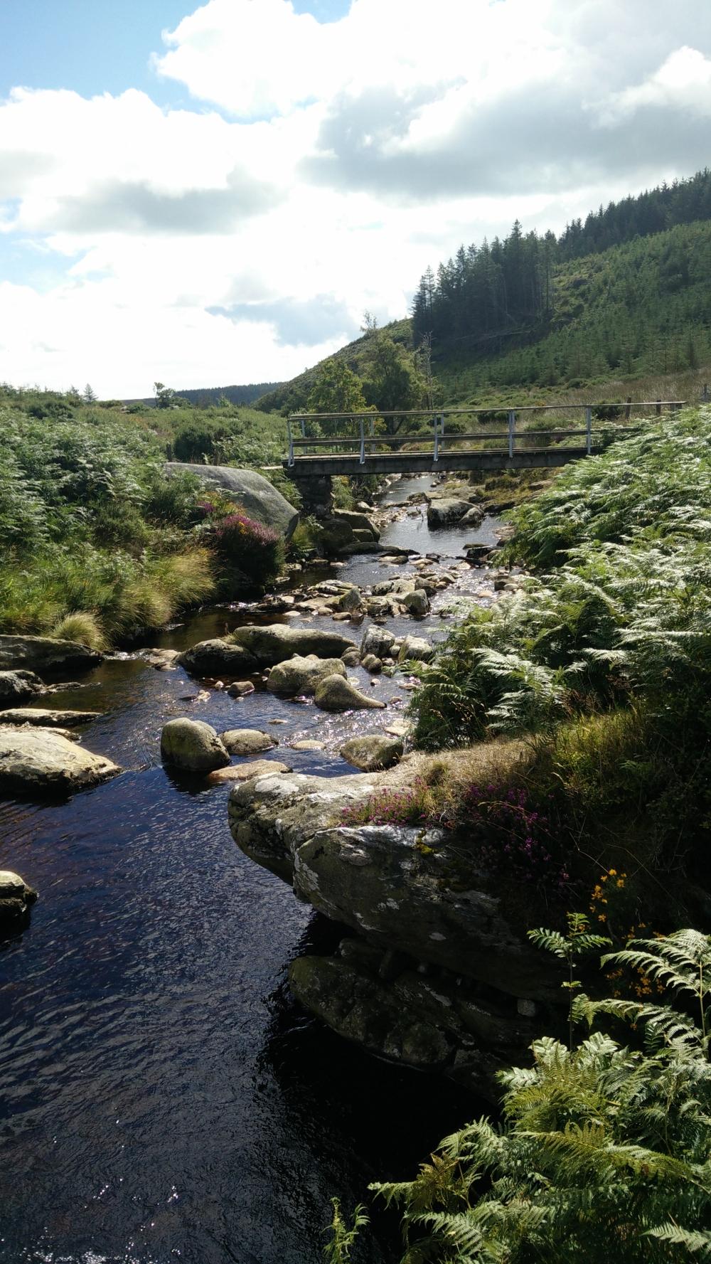 Dargle River